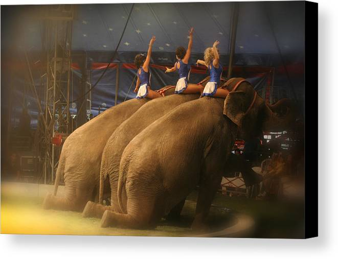 Circus Canvas Print featuring the photograph Three Elephants At The Circus by Robert Voorheis