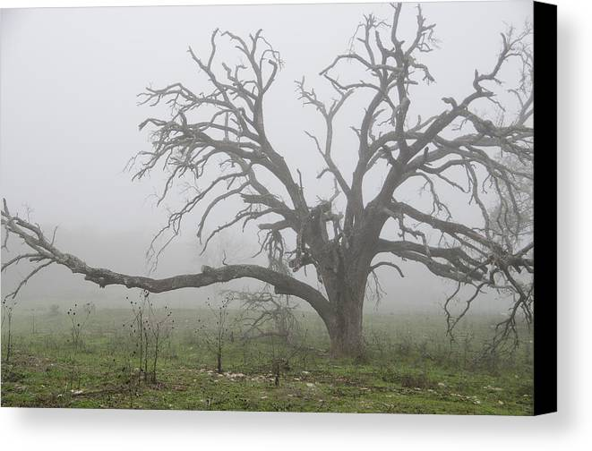 Canvas Print featuring the photograph Through The Fog by Gerald Andersen