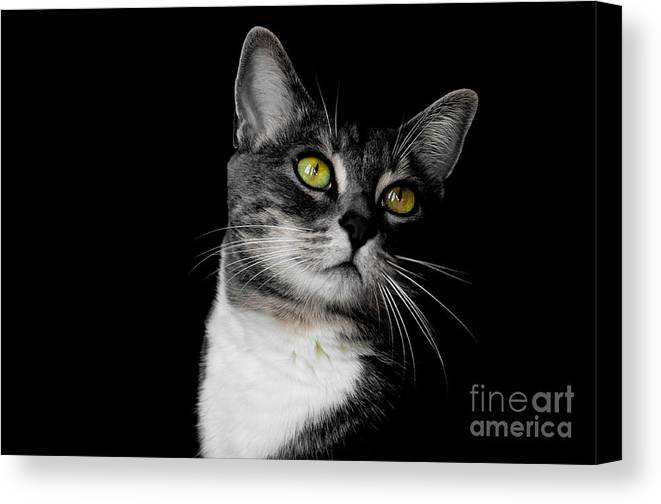 Cat Canvas Print featuring the photograph Ti Min by Bianca Nadeau