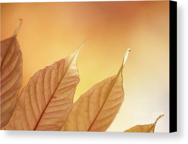 Leaves Canvas Print featuring the photograph Tips by Andrew Brooks