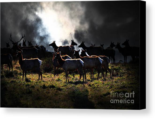 Bayarea Canvas Print featuring the photograph Tomales Bay Harem Under The Midnight Moon - 7d21241 by Wingsdomain Art and Photography