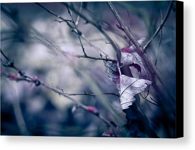 Torn Canvas Print featuring the photograph Torn And Tattered by Shane Holsclaw