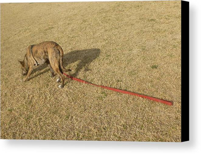 Dog Canvas Print featuring the photograph Tracking The Rabbit by Montana Wilson