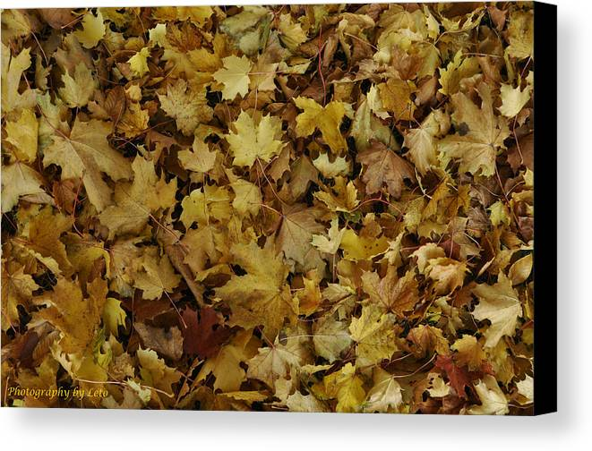 Autumn Canvas Print featuring the photograph Transition Of Autumn by Leto Covington
