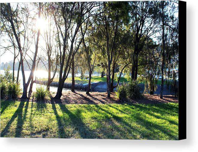 Photograph Canvas Print featuring the photograph Tree And Shadow by Qian Ren