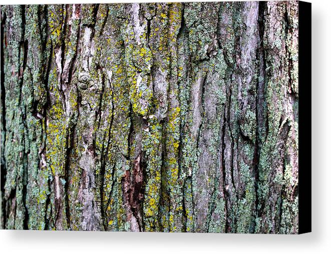 Tree Bark Detail Study Moss Nature Branches Leaves Green Canvas Print featuring the mixed media Tree Bark Detail Study by Design Turnpike