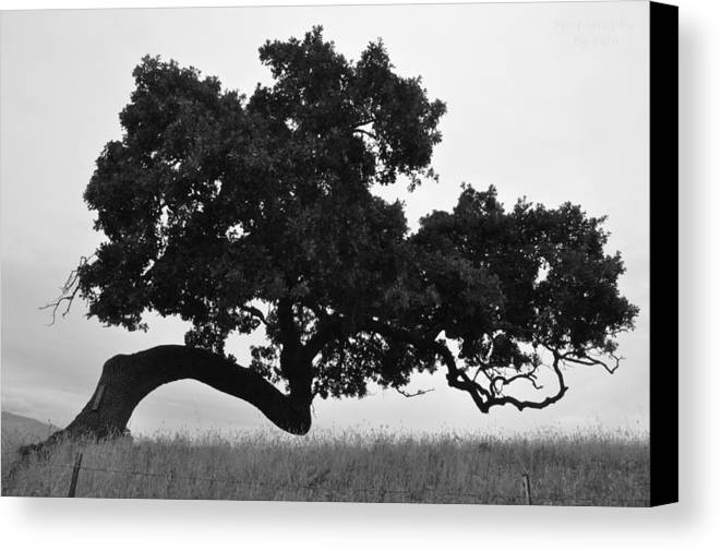 Tree Canvas Print featuring the photograph Tree Of Life by Leto Covington