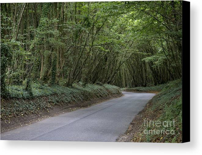 England Canvas Print featuring the photograph Tree Tunnel by Patrice Dwyer