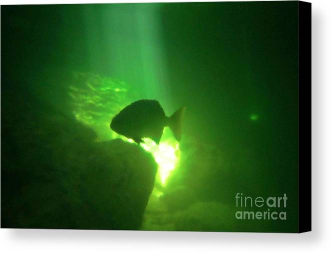 Tropical Fish Shilouette In A Cenote Canvas Print featuring the photograph Tropical Fish Shilouette In A Cenote by Halifax photography by John Malone