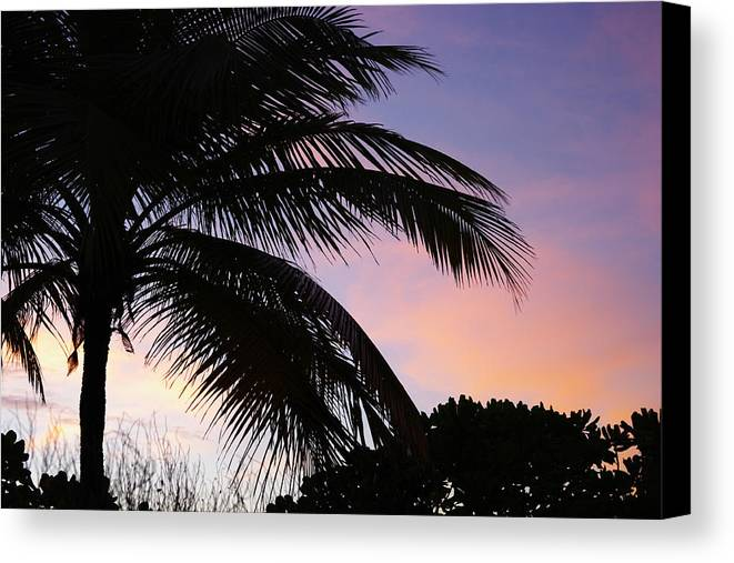 Palm Tree Canvas Print featuring the photograph Tropical Sunset by Elena Paskova