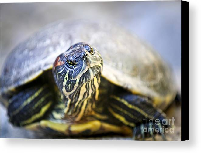 Turtle Canvas Print featuring the photograph Turtle by Elena Elisseeva