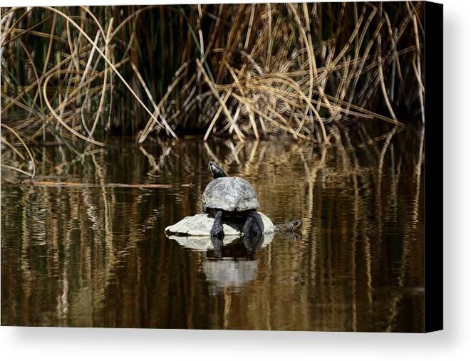 Turtle On Turtle Canvas Print featuring the photograph Turtle On Turtle by Ernie Echols