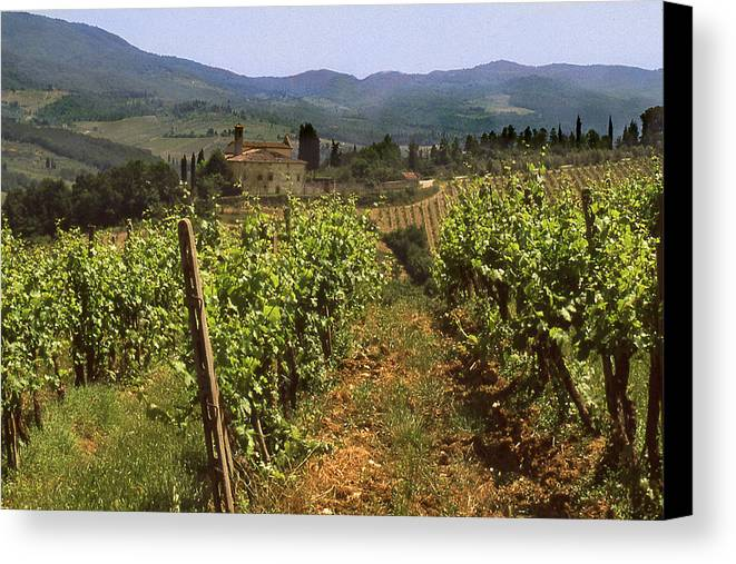 Wine Canvas Print featuring the photograph Tuscany Vineyard No.2 by Mel Felix