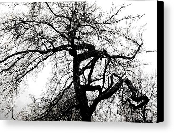 Tree Canvas Print featuring the photograph Twisted Tree In Black And White by Ann Powell
