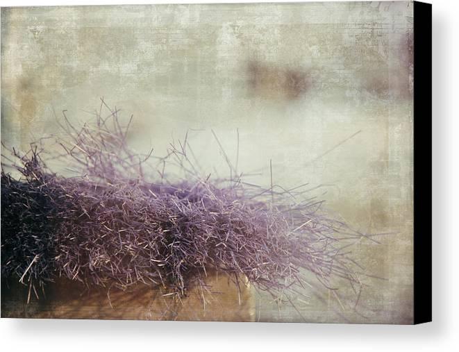 Soft Canvas Print featuring the photograph Unbearable Softness by Zina Zinchik