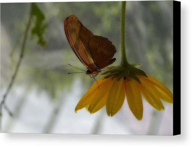 Flowers Canvas Print featuring the photograph Under Cover by Kimberly Wanca