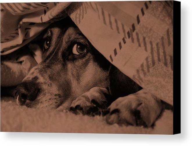 Dog Canvas Print featuring the photograph Undercover Hound by Paul Wash
