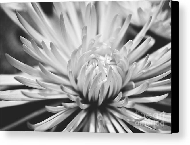 Flower Picture Canvas Print featuring the photograph Unfolding by Artist and Photographer Laura Wrede