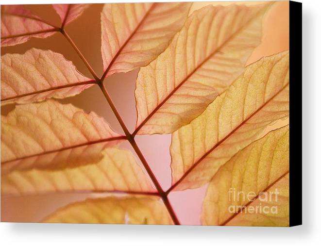 Leaves Canvas Print featuring the photograph Veins by Andrew Brooks