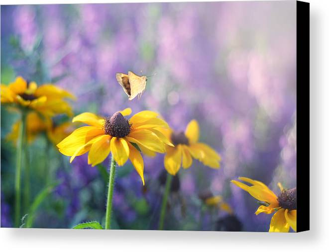 Butterflies On Flowers Canvas Print featuring the photograph Wanderlust by Amy Tyler