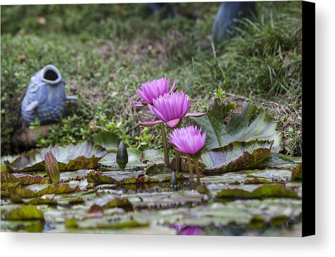 Water Lilly Canvas Print featuring the photograph Water Lilly Trio by Charles Warren
