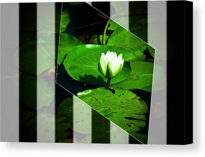Water Lily Canvas Print featuring the photograph Water Lilly by Melvin Busch