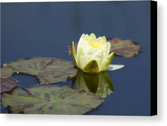 Flowers Canvas Print featuring the photograph Waterlily One by Sharin Gabl