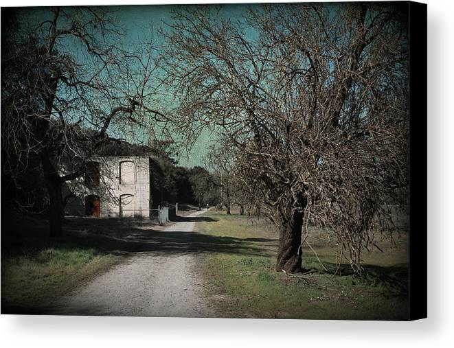 Sycamore Grove Park Canvas Print featuring the photograph Way Back When by Laurie Search