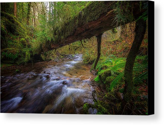 Oregon Canvas Print featuring the photograph West Humbug Creek by Everet Regal
