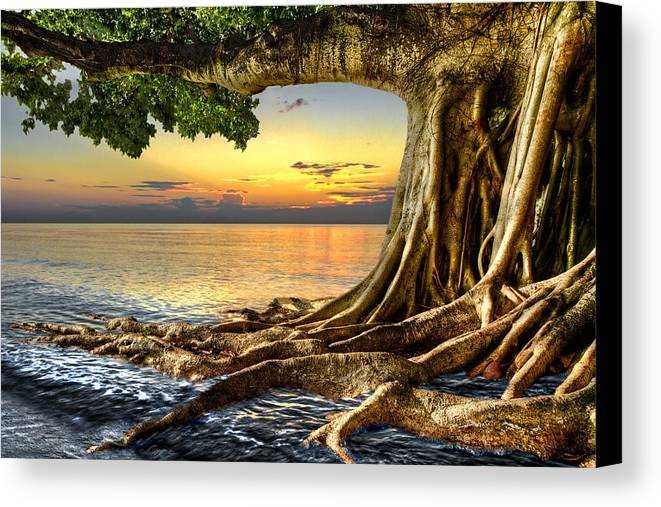 Fine Canvas Print featuring the photograph Wet Dreams by Debra and Dave Vanderlaan