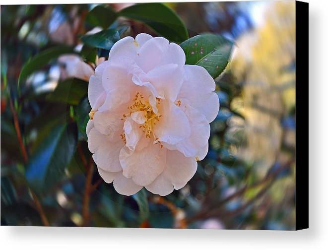 Floral Canvas Print featuring the photograph White Camellia by Deborah Good