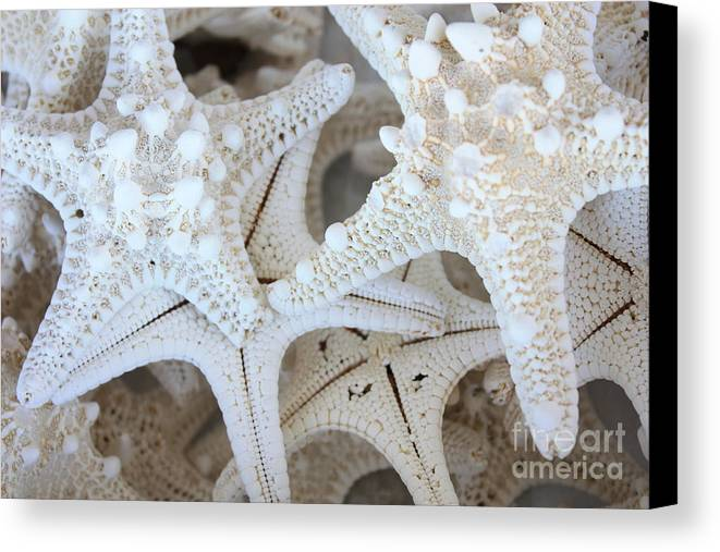 White Canvas Print featuring the photograph White Starfish by Carol Groenen
