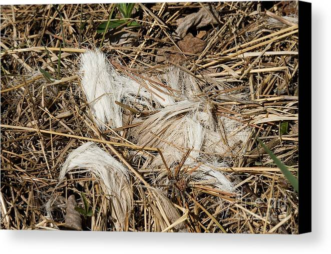 Odocoileus Virginianus Hair Canvas Print featuring the photograph White-tailed Deer Hair by Linda Freshwaters Arndt