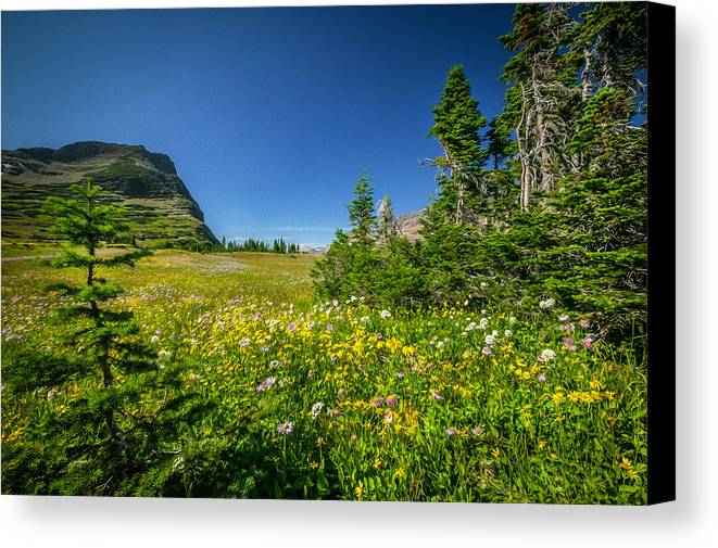 Glacier National Park Canvas Print featuring the photograph Wild Flowers Glacier National Paintedpark  by Rich Franco