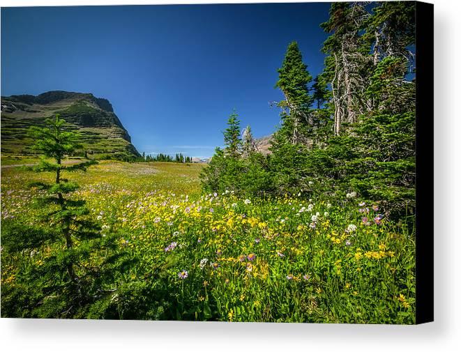 Glacier National Park Canvas Print featuring the photograph Wild Mountain Flowers Glacier National Park  by Rich Franco