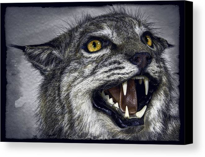 Wildcat Canvas Print featuring the photograph Wildcat Ferocity by Daniel Hagerman