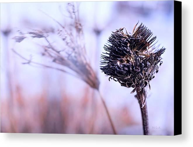 Flowers Canvas Print featuring the photograph Winter Flowers by Bob Orsillo