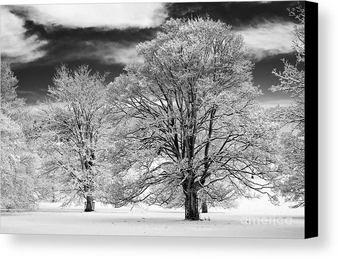 Horse Chestnut Canvas Print featuring the photograph Winter Horse Chestnut Trees Monochrome by Tim Gainey