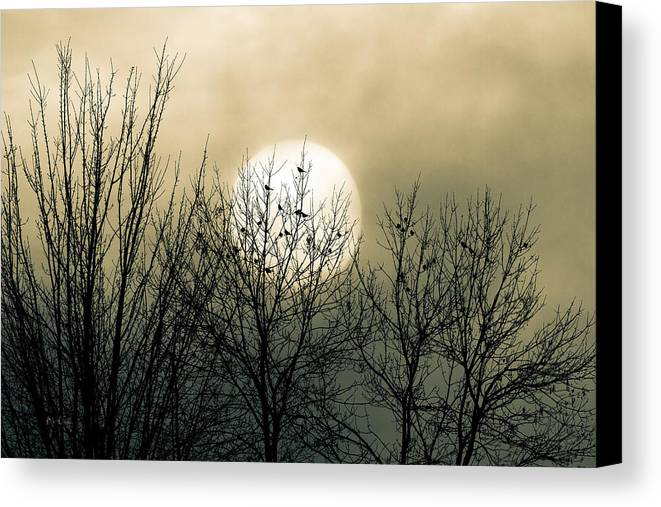 Winter Canvas Print featuring the photograph Winter Into Spring by Bob Orsillo