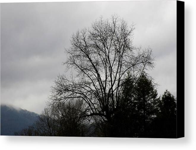 Tree Canvas Print featuring the photograph Winter Trees Number Four by Paula Tohline Calhoun