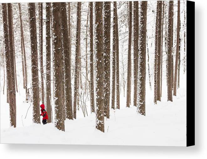 north Woods Snow snowy Woods winter Woods duluth lake Superior Winter fresh Snow greeting Cards amity Woods lester Park child In Landscape childhood Wonder winter Wonderland Canvas Print featuring the photograph Winter Frolic by Mary Amerman