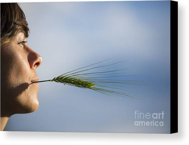 Woman Canvas Print featuring the photograph Woman With A Wheat by Mats Silvan