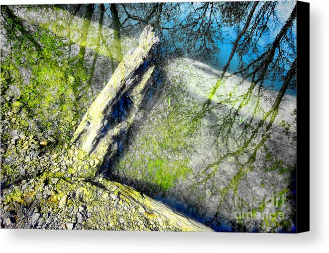 Abstract Canvas Print featuring the photograph Wood Reflections by Olivier Le Queinec