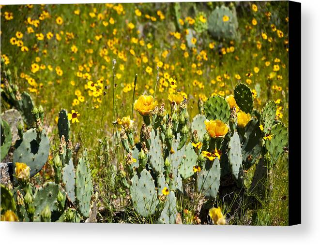 Texas Canvas Print featuring the photograph Yellow Blooms by Mark Weaver