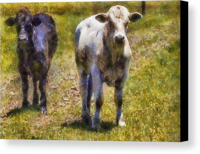Bull Canvas Print featuring the painting Young Bulls by Barry Jones