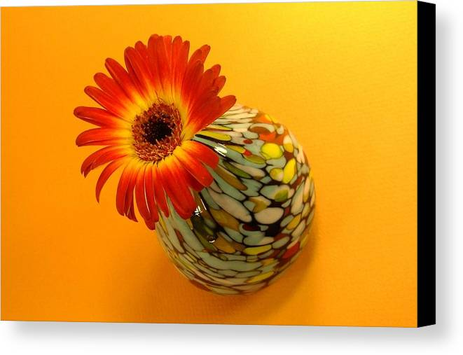 Gerbera Photographs Canvas Print featuring the photograph 2332c-001 by Kimberlie Gerner