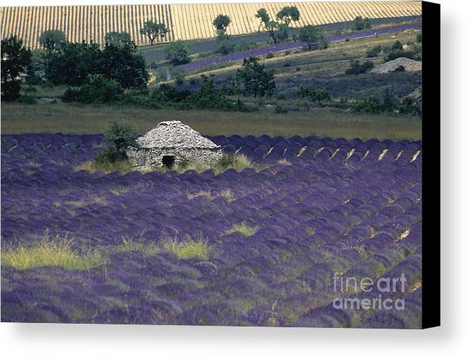 Touristic Canvas Print featuring the photograph Field Of Lavender. Sault by Bernard Jaubert