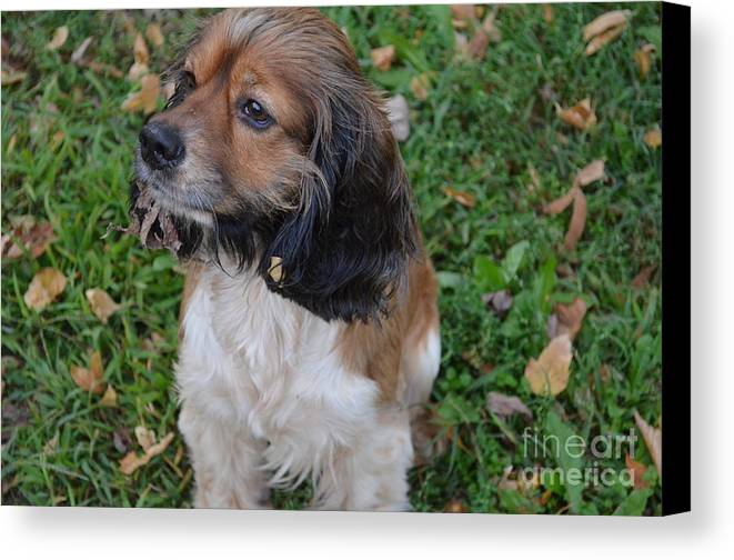 Animals Canvas Print featuring the photograph My Little Bear by Debbie Portwood