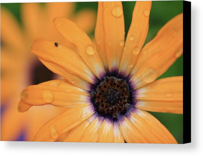 Flowers Canvas Print featuring the photograph Untitled by Rick Berk