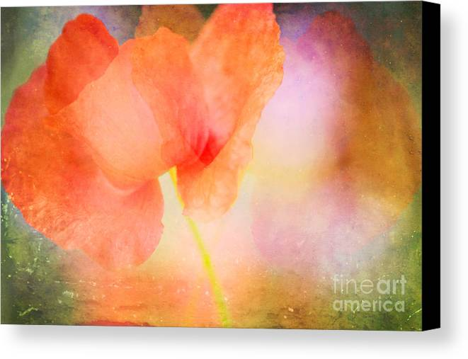 Poppy Canvas Print featuring the photograph Poppy by Kim Fearheiley